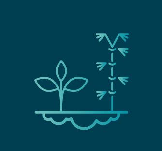 Jardin d'assainissement écologique
